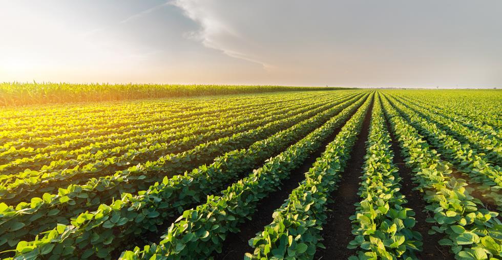 Crops farming