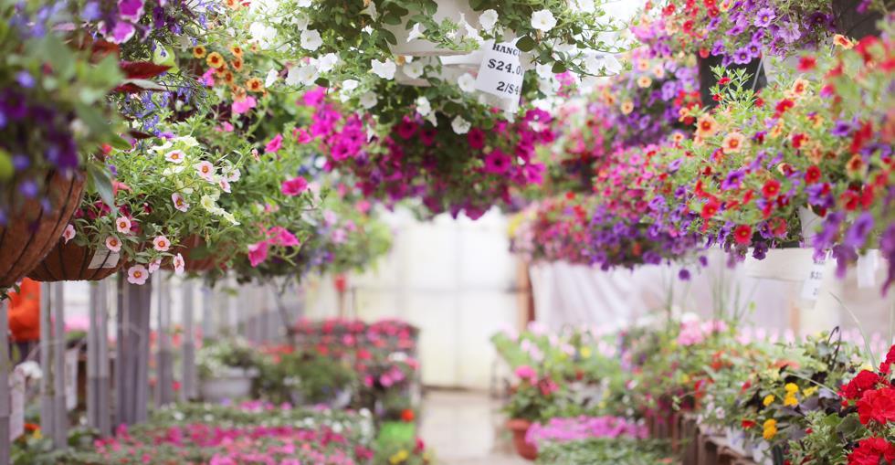 Sector Spotlight: Garden Centres