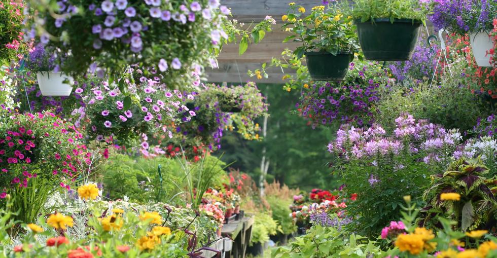 trends garden industry