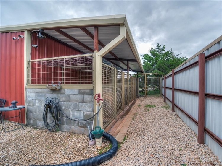 thriving dog ranch daycare - 8