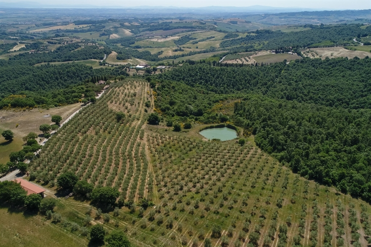 estate tuscany for sale - 9