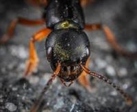 full service pest control - 1