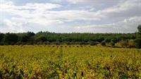 fantastic olive orchard vineyard - 2