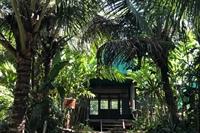 ecolodge 117 acres rainforest - 2