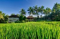 new hotel ubud bali - 2