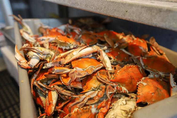 turnkey seafood house full - 4