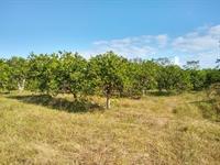 50 acres farm southern - 2