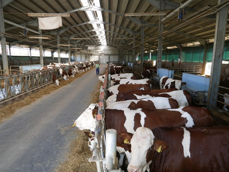 romanian livestock farms - 9