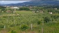 five hectare orchard farm - 3