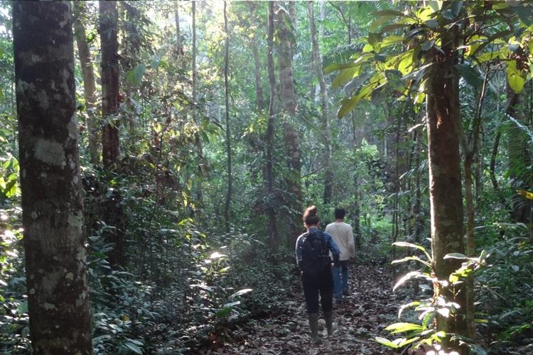 ecolodge 117 acres rainforest - 11