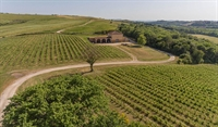 winery montalcino for sale - 2