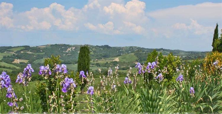 farm with vineyard montalcino - 9