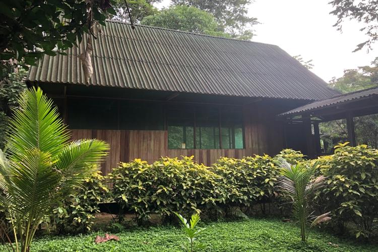 ecolodge 117 acres rainforest - 7
