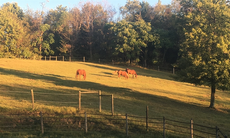 pet resort horse farm - 4