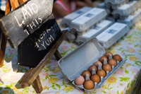 regenerative eggs farm macedon - 3