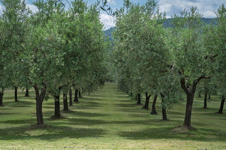 estate tuscany - 7