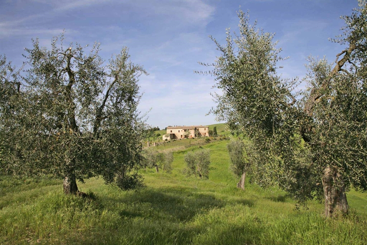 farm with vineyard montalcino - 6