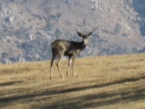 outdoor hospitality retreat california - 6