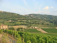 wine farm for sale - 1