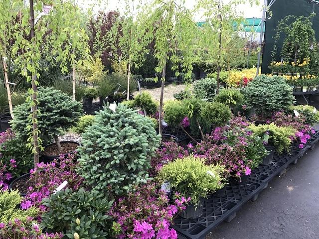 award winning nursery garden - 5