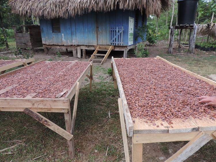 teak cacao farm - 8