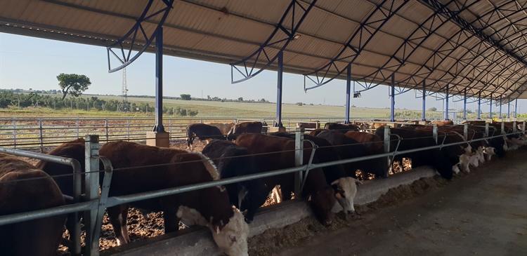 modern breeding farm of - 6