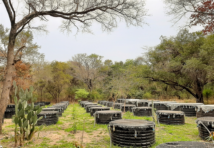 fish farm namibia - 13