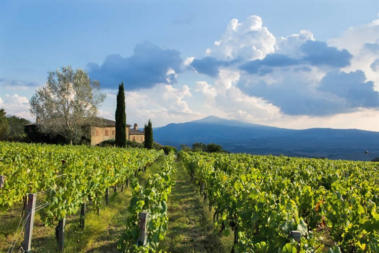 winery montalcino for sale - 7