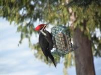 unique profitable birds food - 1