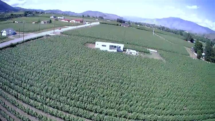 vineyard oliver - 5
