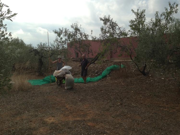 successful catalunya holiday farm - 4
