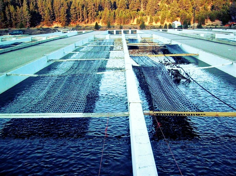 Buy a fish farm business investment opportunity in romania for Fish farming business