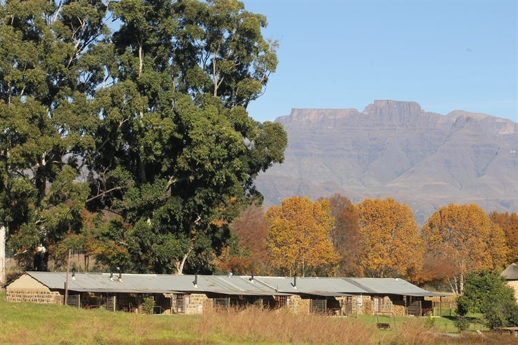 guest farm drakensberg with - 11