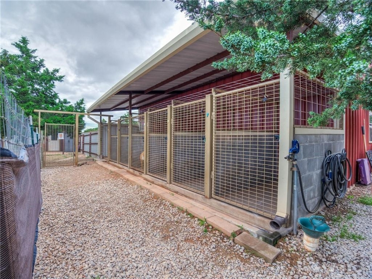 thriving dog ranch daycare - 4