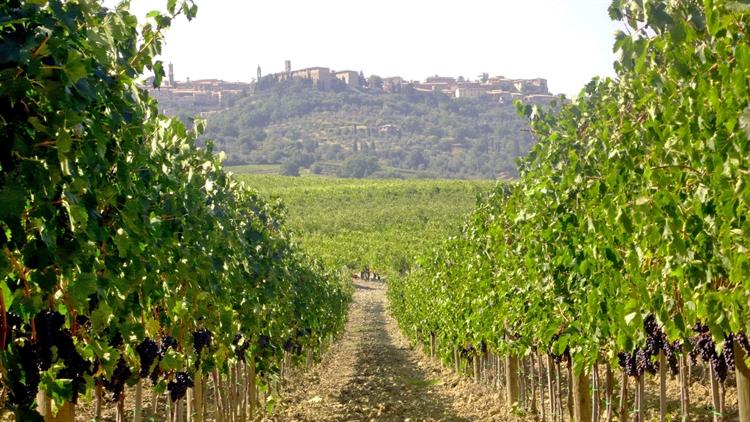 wine farm for sale - 7