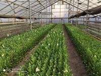 flower farm 0 6 - 3