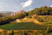 farm with vineyard montepulciano - 1