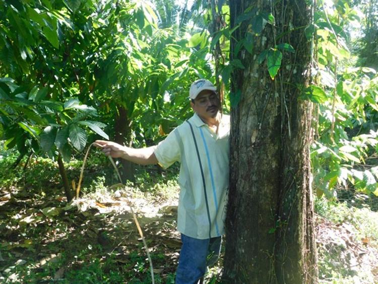 teak cacao farm - 13