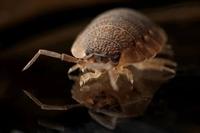 long time pest control - 1