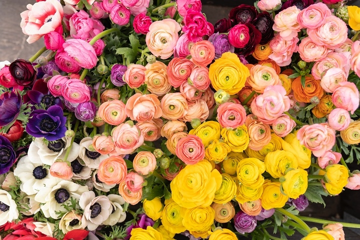 nationally known florists suffolk - 2