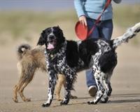 established dog walking training - 1