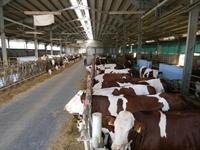 agricultural farm zootechnical farm - 1