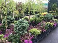 award winning nursery garden - 1