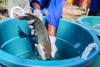 fish farm namibia for - 1