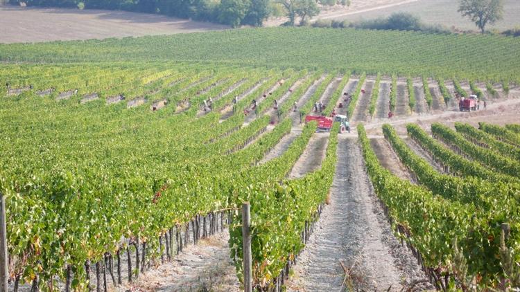 wine farm for sale - 8