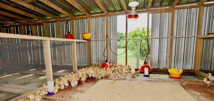 organic ranch farm property - 7
