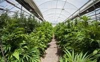montana marijuana grow retail - 1