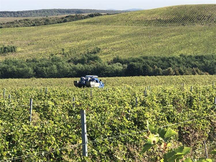 300 hectares vineyard romania - 12