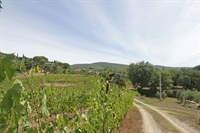 winery tuscany for sale - 1