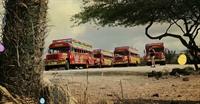 established profitable nightlife buses - 3